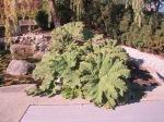 Vancouver Garden 9