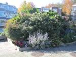 Vancouver Garden 8