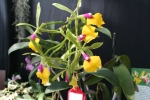 Orchid 13-16