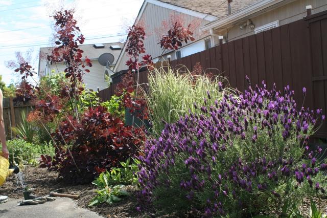 Beacon Hill Garden Spring 2013