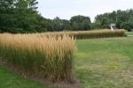 Reiman Gardens 7
