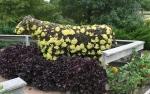 Reiman Gardens 9