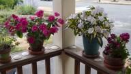 SunPatiens on my porch