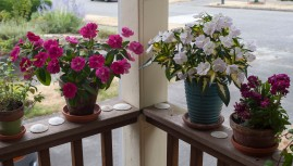 SunPatiens on my porch