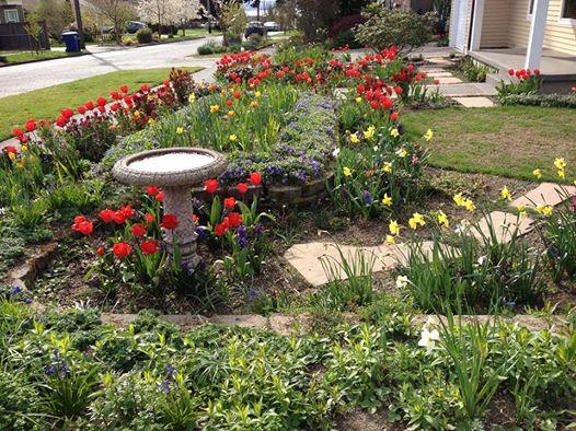 Neighbor's Serious Tulips
